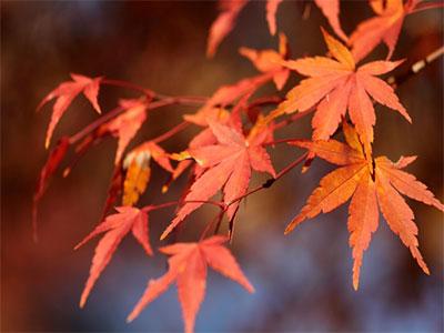 秋分の日 2015 いつ